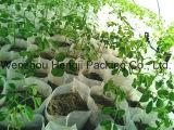 Tessuti non tessuti biodegradabili dei pp Spunbonded per Weed Conrol