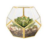 도매 파충류 유리제 Terrarium는 신선한 꽃을 보존했다
