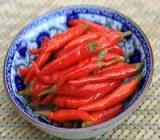熱い販売の新しい穀物の優れた品質漬物の赤いChillis