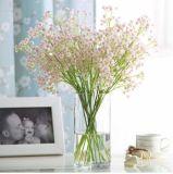 Les importateurs préservés de Gypsophilas de fleur ont préservé la fleur fraîche comme cadeau