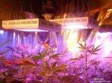 100W e 300W levou crescer a luz para o crescimento da planta