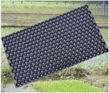 Machine de thermoformage de plateaux de plantation automatique de semences en plastique