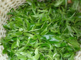 Té Verde Extracto Seco Camellia Sinensis Té Polifenol