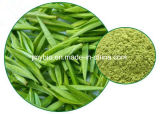 Чай высокого качества зеленый извлек полифенол зеленого чая 98%