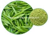 De Groene Thee van uitstekende kwaliteit haalde Polyphenol van de Thee van 98% Groene