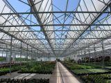 [فنلو] دفيئة كبير زجاجيّة لأنّ نباتيّ ينمو