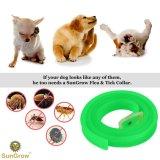 Естественный Non токсический ворот блохи & тикания для собак