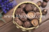 Fungo liscio secco della lentinus edodes del Brown