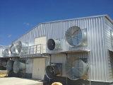 Het geprefabriceerde Huis van de Kip van het Gevogelte van de Structuur van het Staal met Apparatuur (kxd-PCH1)