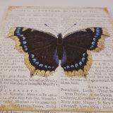 Nizza oggetto d'antiquariato di legno poco costoso personalizzato  Insieme della piastra della parete della farfalla