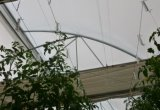 De Haken van de Tomaat van het Staal van Gavanized met de Streng van pp