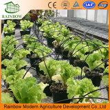 La Agricultura de Invernadero Riego por Goteo Sistema de Riego