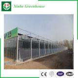 Heißes eingetauchtes galvanisiertes Glasgewächshaus für Wasserkultursysteme