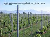 Poste de Gi de qualité pour des vignes