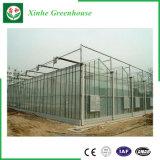 Multi-Überspannung Glas-Gewächshaus