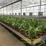 Invernadero para el invernadero vegetal de la flor de la casa verde del restaurante