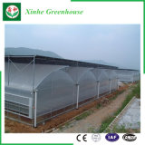 Sistema di coltura idroponica delle serre del polietilene per gli ortaggi/fiori/frutta