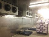Projeto Bio-Frio do armazenamento em médico