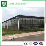 تجاريّة [مولتي-سبن] حديقة يقسم دفيئة زجاجيّة