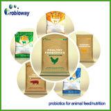 Additivo dell'alimentazione animale del bestiame di Butyricum Probiotics del clostridio