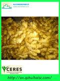Vegetais frescos chineses Gingers seca ao ar