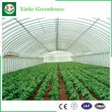 Solo invernadero agrícola del túnel de la película plástica del palmo del bajo costo