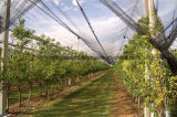 UV 보호를 가진 100%Virgin HDPE Grap 또는 사과 나무 반대로 우박 그물