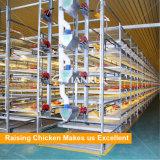 matériel de cage de batterie de poulet à rôtir de matériel de volaille
