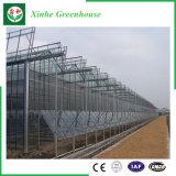 Serres chaudes en verre de Multi-Envergure de jardin/ferme/tunnel pour Rose/pomme de terre