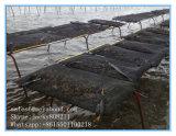 Auster wachsen Beutel-Qualitäts-Austeren-Ineinander greifen-Beutel