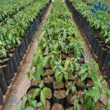 2%の-3%紫外線抵抗はプラントカバー/地被植物/農業のNonwovenファブリックを保護する