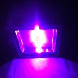 365-400nm luz de inundación ULTRAVIOLETA de la MAZORCA púrpura LED del color 30W 50W 100W con 5 años de garantía