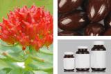 340mg reine anerkannte Rhodiola Rosea Auszug-Kapsel-Ergänzung