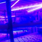 LED 플랜트는 방수 백색 가득 차있는 스펙트럼 꽃 플랜트 램프를 증가한다