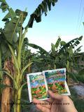 Unigrow organisches durch Mikrobendüngemittel auf dem Bananen-Pflanzen