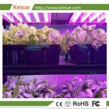 Plantes hydroponique Keisue plante en croissance avec voyant grandir la lumière en usine