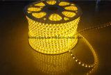Indicatore luminoso luminoso eccellente della corda di SMD5050 220V 120V LED