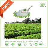De zuivere Natuurlijke Zoetmiddelen van het Uittreksel Stevia