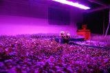 El LED crece el panel ligero LED para el jardín de interior hidropónico