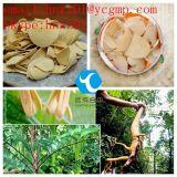 30% CLAE Kava extrato da planta Kavalactones em pó