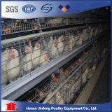 3 -5 صفاح نوع طبقة دجاجة قفص [بيرد كج] قفص حيوانيّ لأنّ عمليّة بيع يربّي تجهيز [مشري] زراعيّة لأنّ مزرعة حديثة