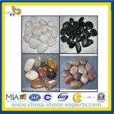 Kiezelsteen Stone/Kei voor Landscape (yY-Zwarte/witte/rode/gele kiezelstenen)