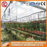 유리제 녹색 집이 상업적인 Aulminum에 의하여 식물성 꽃 윤곽을 그린다