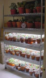 DIY justierbare Chrom-Blumen-Bildschirmanzeige-Draht-Fach-Zahnstange für Gewächshaus-Gebrauch