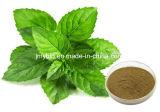 100% Natural Extracto de hortelã-pimenta de Antidepressivo 4: 1 ~ 20: 1, Mentol 1% ~ 8%