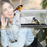 Comercio al por mayor de acrílico de colgar comedero para pájaros