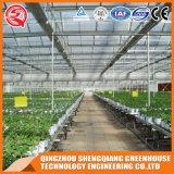 Овощи/цветки/дом фермы/сада стеклянная зеленая