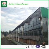 Estufa agricultural da estufa de vidro barata do preço para Growing vegetal