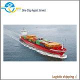 Agente de Transporte Marítimo Freight Forwarder Especiais
