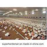 Fournisseurs de matériel de ferme avicole de poulet en Afrique du Sud